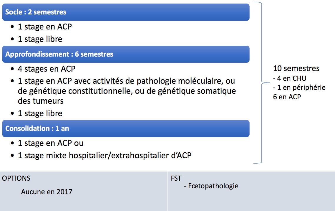 Anatomie et cytologie pathologiques 2017 saihm - Cabinet d anatomie et cytologie pathologiques ...